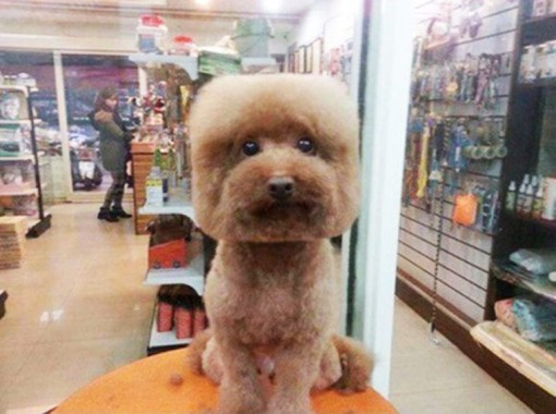 Square-trimmed dog